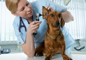 Assicurazione cane e gatto on line con mioassicuratore for Assicurazione casa on line