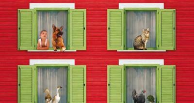 Condominio: Quanti Animali Domestici si Possono Tenere in Appartamento