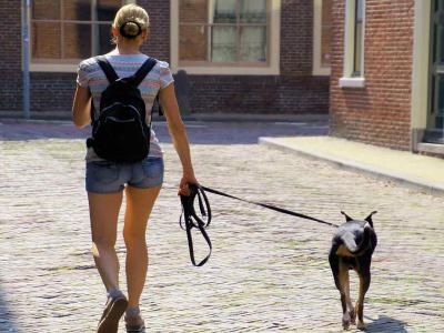 Porti a spasso il cane? Ecco cosa rischi
