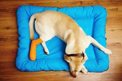Assicurazione animali domestici: come funziona e cosa copre